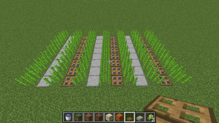 サトウキビを植える